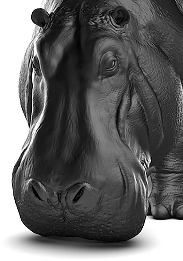 Detalle de la cabeza, The Hippopotamus Sofa, Máximo Riera, 2014.