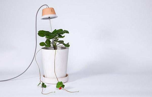 Los sistemas de jardineras de Bulbo