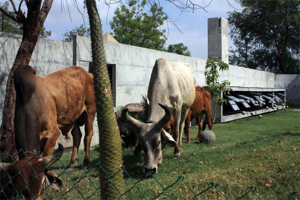 Refugio de hormigón y agua de Matharoo Associates en India