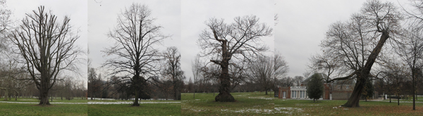 treeshydepark.jpg