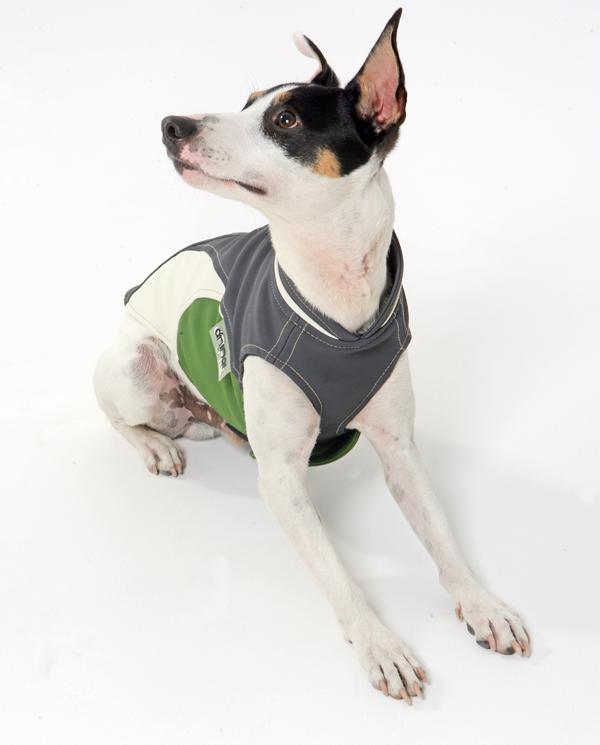 Ropa y moda para perros, diseño de Amarillocromo
