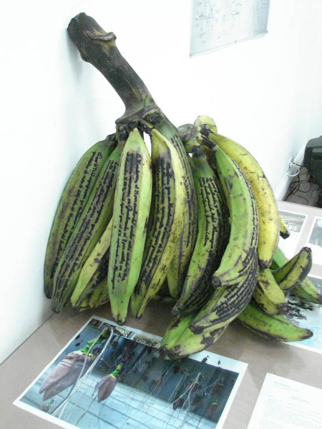 TEORéTica: Novo Museo Tropical