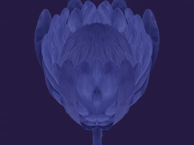 blueseries-flower2.jpg