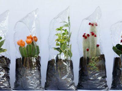 pecha-pucha-la-jardinera-invernadero-de-cenlitrosmetrocadrado-experimenta-01.jpg