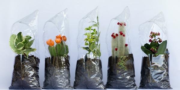 Pecha-Pucha, la jardinera-invernadero de cenlitrosmetrocadrado