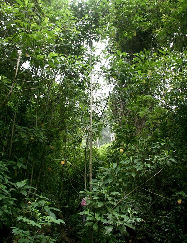 Bosque de reforestación. © LFQ
