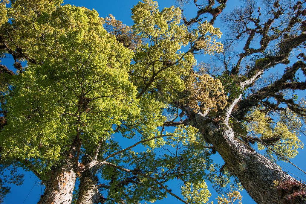 Una de las fotografías impresas que enmarca la fuerza que emana de los árboles. © Fundación Árboles Mágicos.