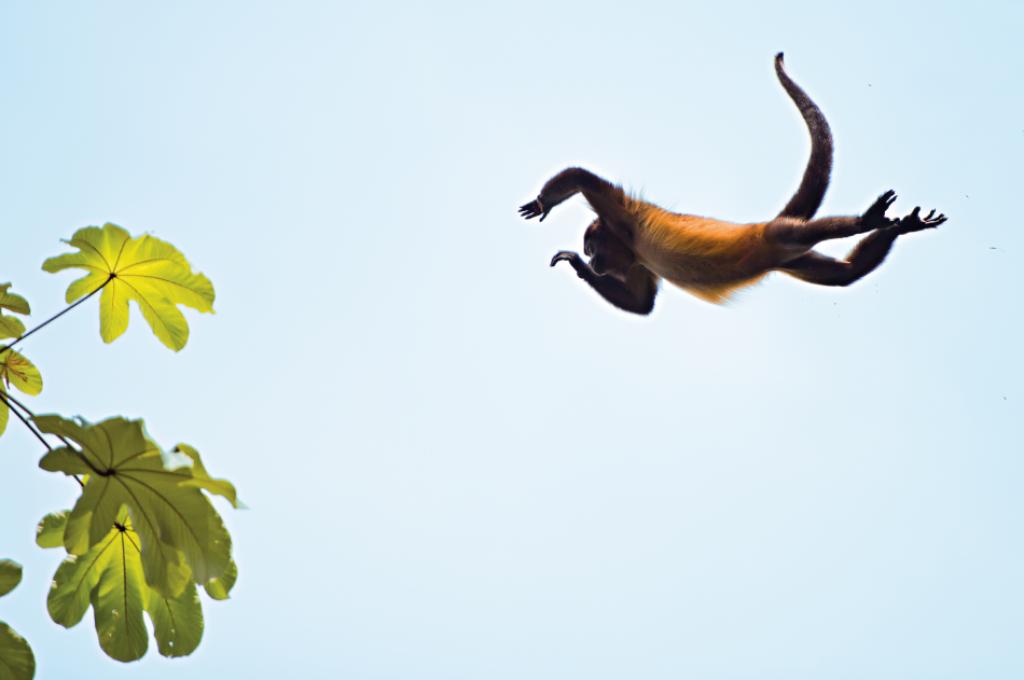 Salto de una de las criaturas que se mueve de rama en rama por el bosque. © Fundación Árboles Mágicos.