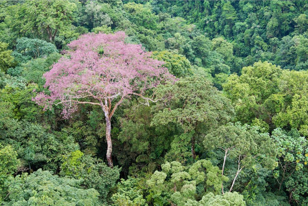 Un vistoso ejemplar inmerso en la espesura del bosque. © Fundación Árboles Mágicos.