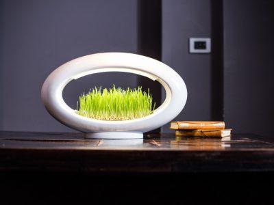Grasslamp, Marko Vuckovic, 2015.