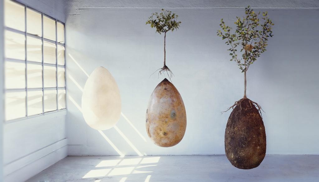 Capsula Mundi, el árbol de la vida de Raoul Bretzel y Anna Citelli