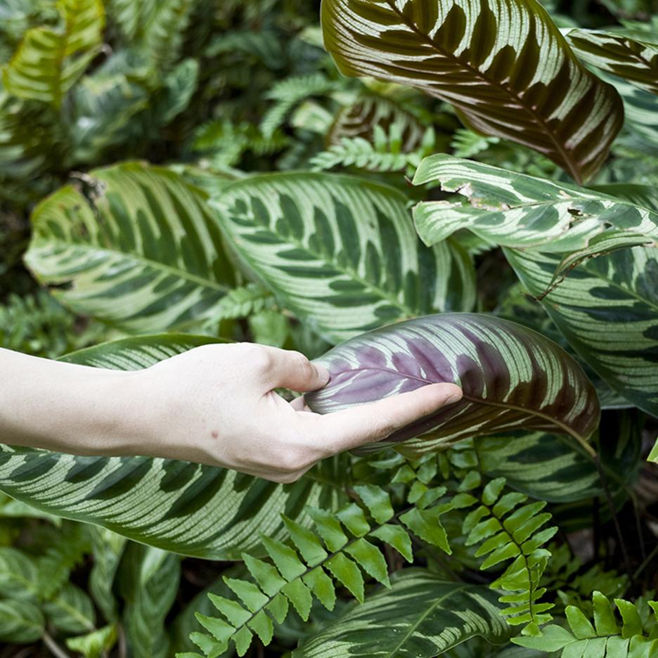 La búsqueda del equilibrio cromático y otros detalles enigmáticos de la flora , The Tropicals, The Rug Makers and Outofstock, 2016.