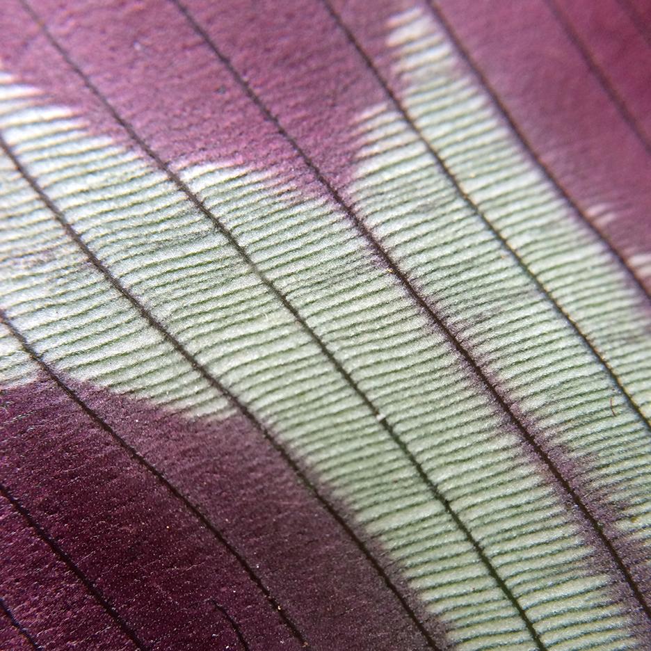 Una vista macro 15X de las estrías de las hojas, The Tropicals, The Rug Makers and Outofstock, 2016