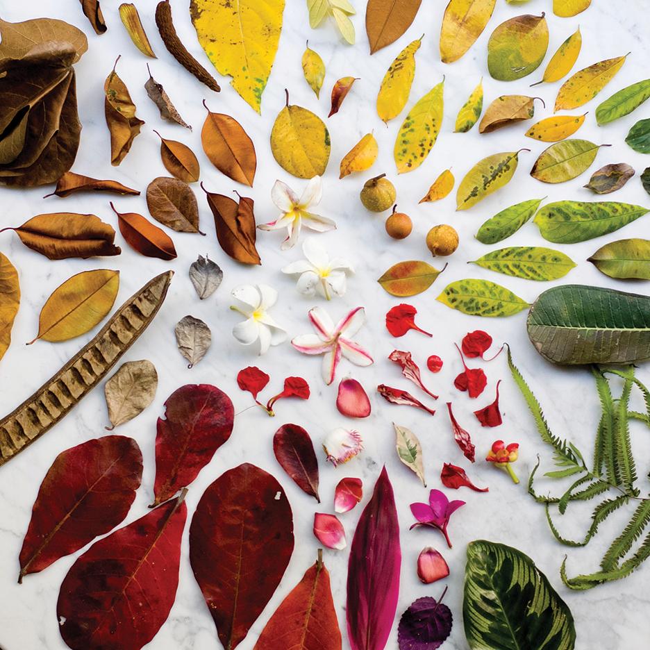 Colección de alfombras de Outofstock para The Rug Makers
