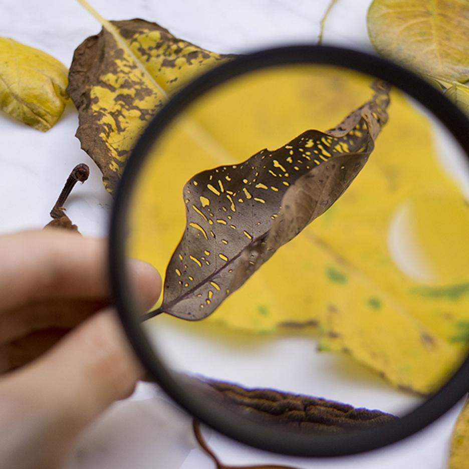 La naturaleza proporciona nuevos descubrimientos, siempre que estemos dispuestos a investigar, The Tropicals, The Rug Makers and Outofstock, 2016.
