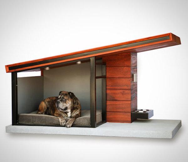 MDK9 Dog Haus de Rahil Taj