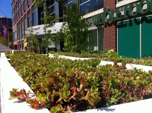 Bus Roots, el autobús con techo para cultivar alimentos y plantas, Marco Castro Cosio, Nueva York