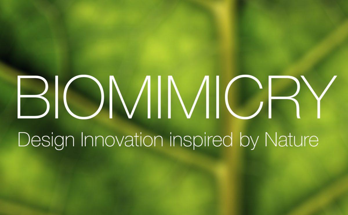1º edición concurso Biomimicry, 2016.