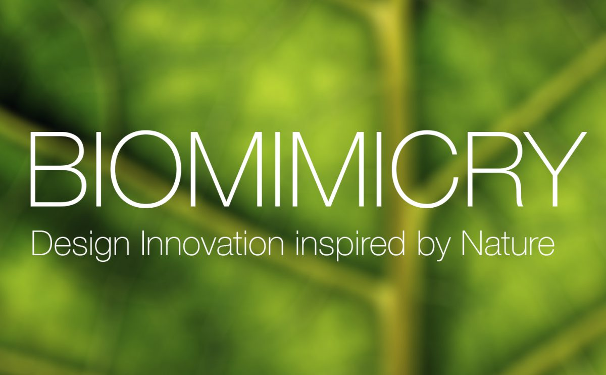 La naturaleza inspira la primera edición del concurso Biomimicry