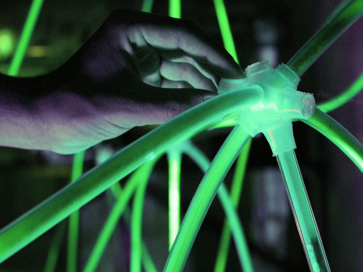 Biolux, bajo el brillo de lo hongos bioluminiscentes de Alice Bonicelli