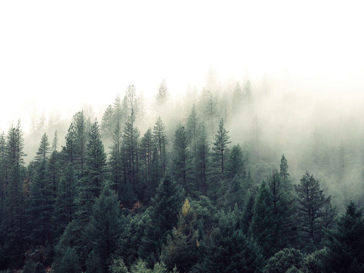 Reforestum, la aplicación para salvar los bosques de Diego Sanz Prieto