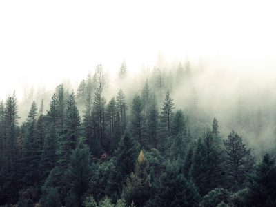 Reforestum, aplicación para salvar los bosques de Diego Sanz Prieto