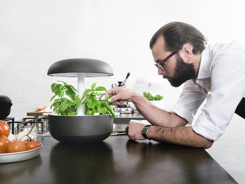 Plantui, sistema de cultivo hidropónico, inteligente y casero