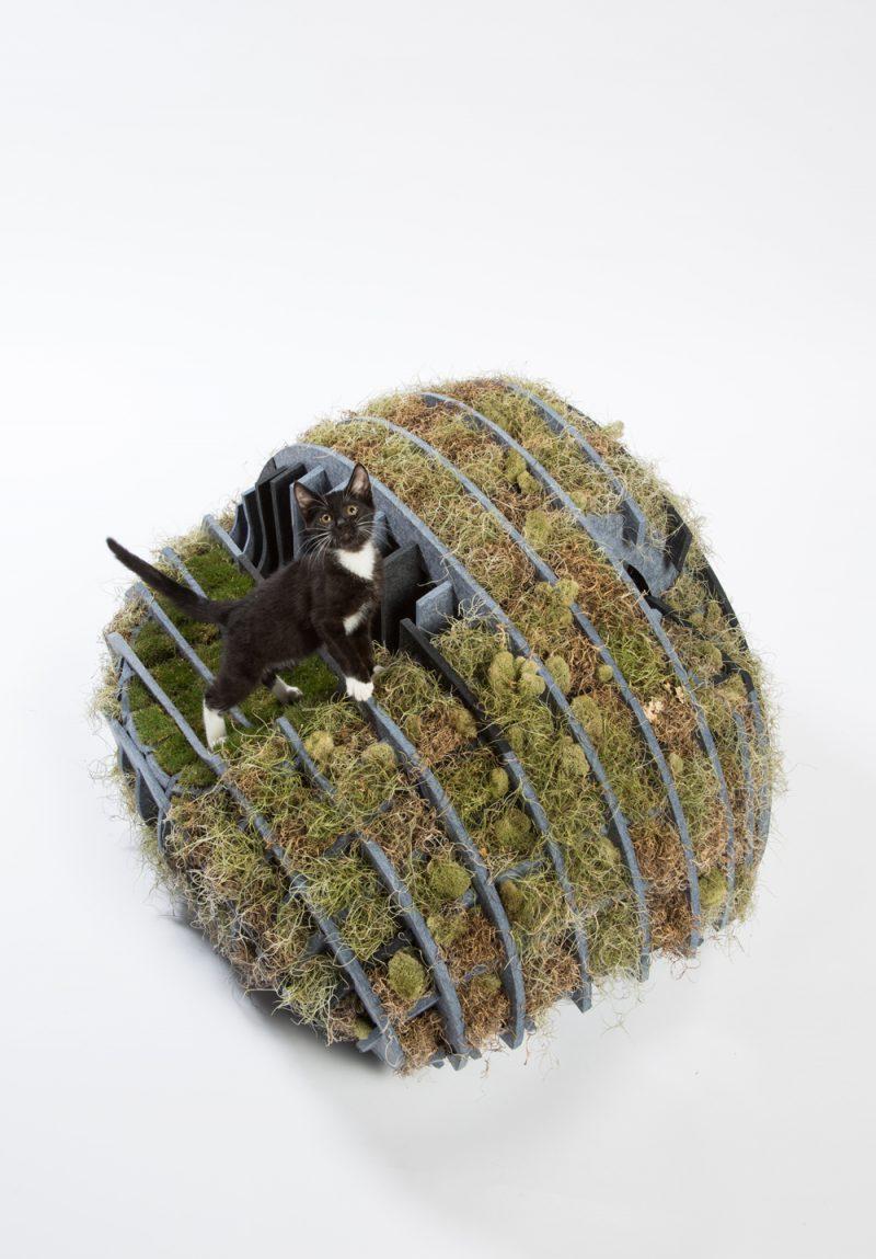 'Guiving Shelter' de Architects for Animals. Flora-Gato, de Formation Association, Terremoto Landscape y Arktura. Fotografía: Meghan Bob.