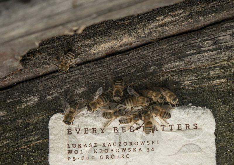 Bee Saving Paper, el papel con alimento para abejas de Saatchi & Saatchi y City Bees. Fotografía: Filip Żołyński