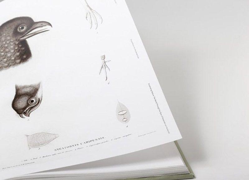 Ilustración científica: los viajes de Alexander von Humboldt