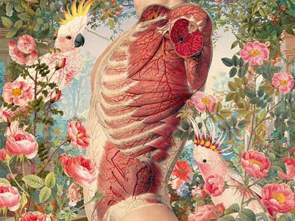 Ciencias naturales, una serie de Juan Gatti. Ilustraciones sin piel