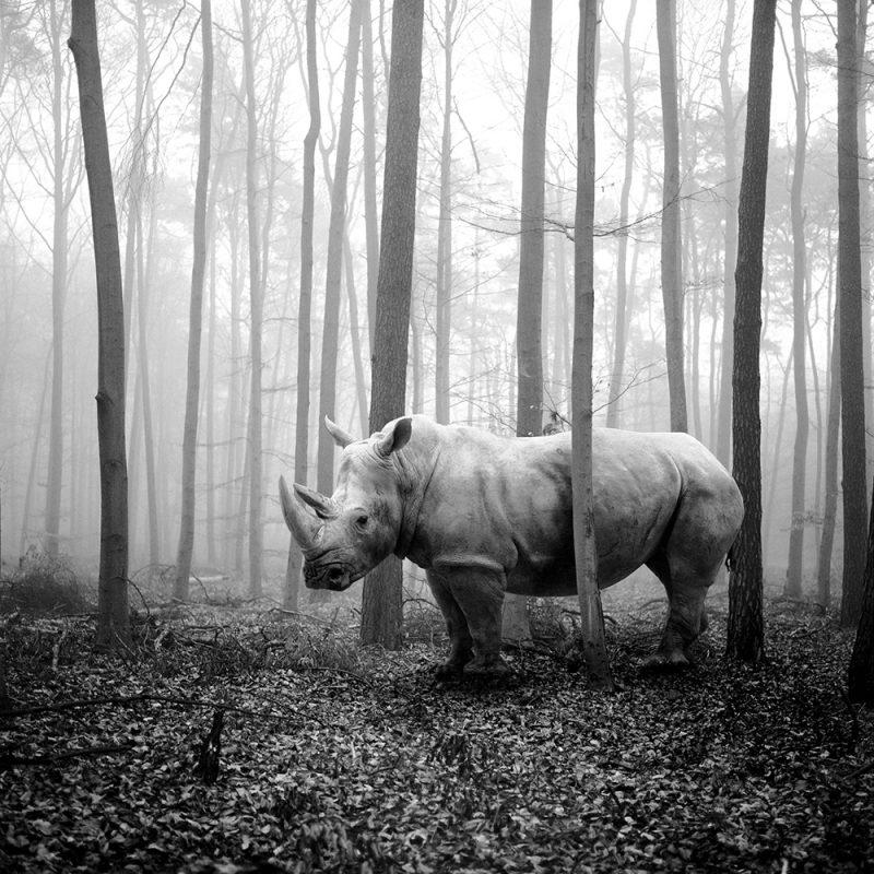 Tierwald, la serie fotográfica de Frank Machalowski. Animales en blanco y negro