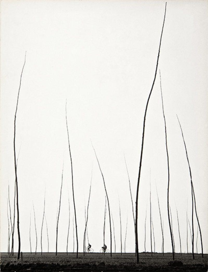 La belleza de las líneas. Fotografías de la Colección Gilman y González-Falla