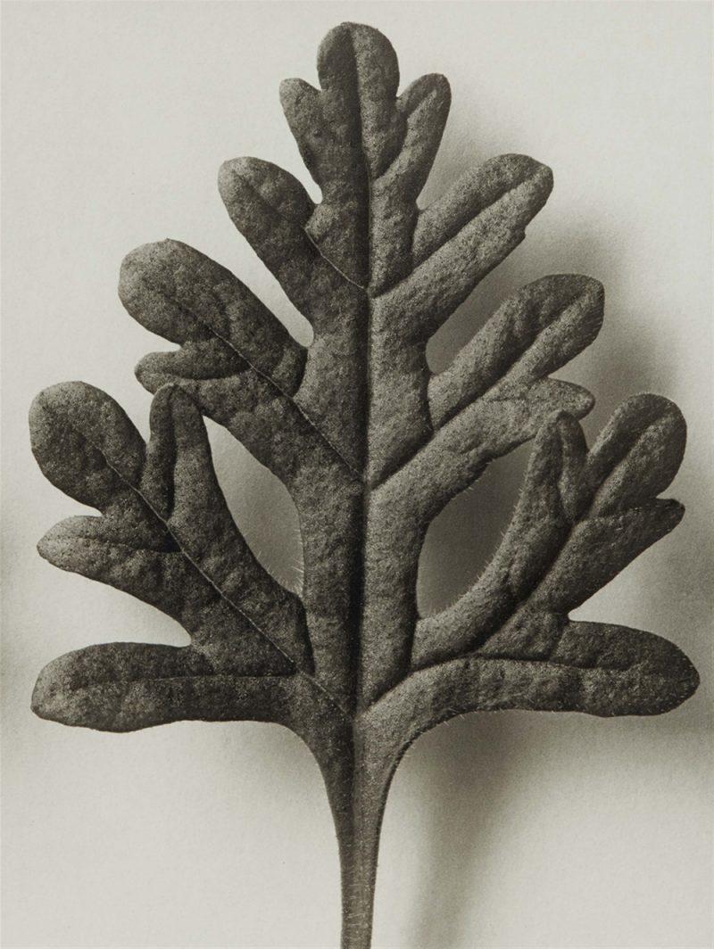 Karl Blossfeldt. Urformen der Kunst, flores en el Museo Nacional Thyssen-Bornemisza