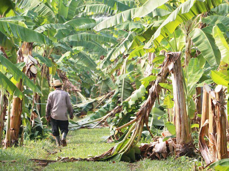 Indianes crea los primeros zapatos hechos con fibra de plátano extraída de desechos agrícolas