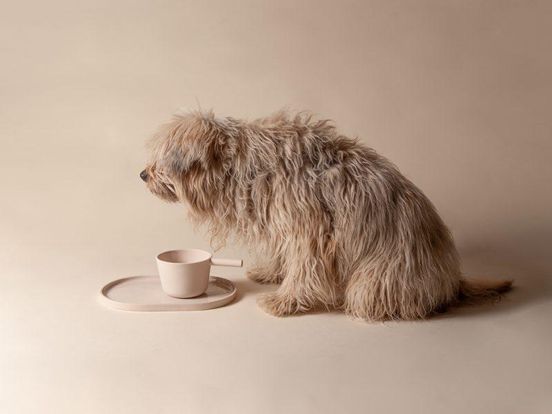 Casa, el proyecto de PerezOchando consagrado a nuestras mascotas