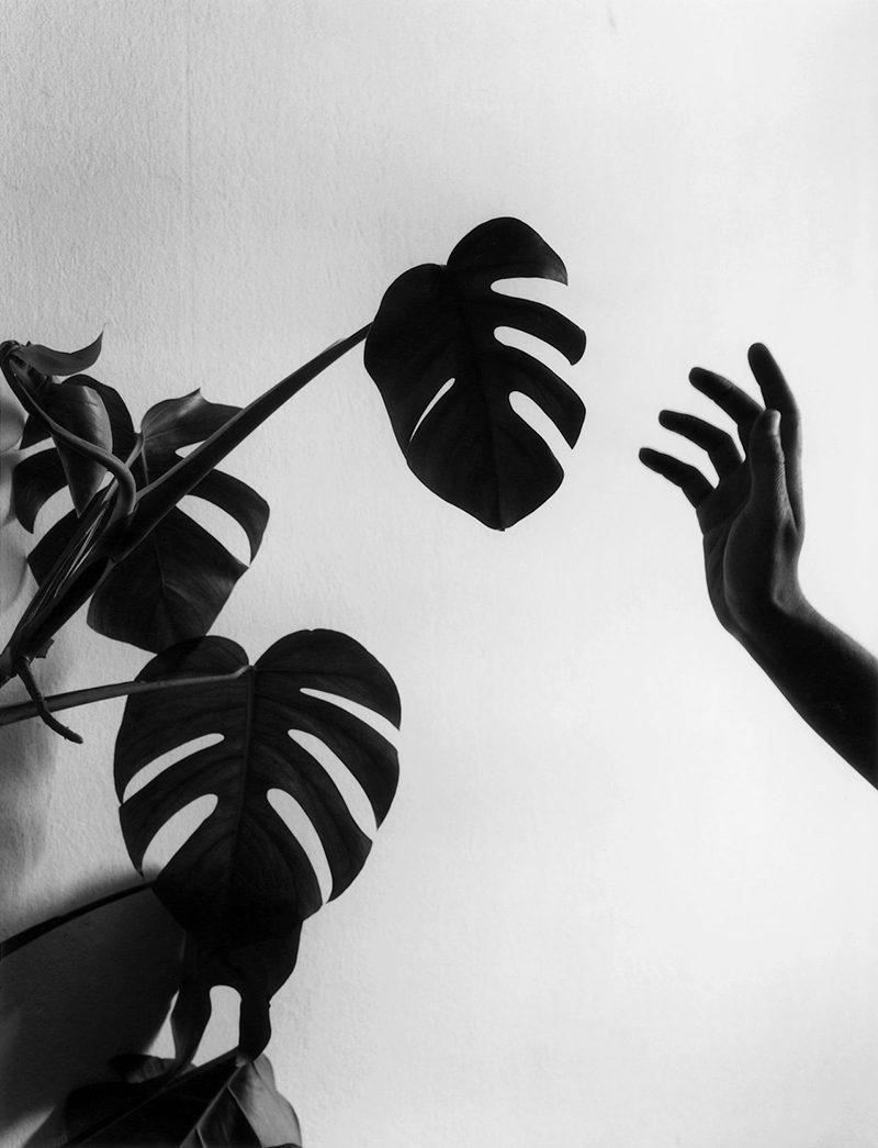 La naturaleza de las cosas, la fotografía de Chema Madoz en el Jardín Botánico de Madrid