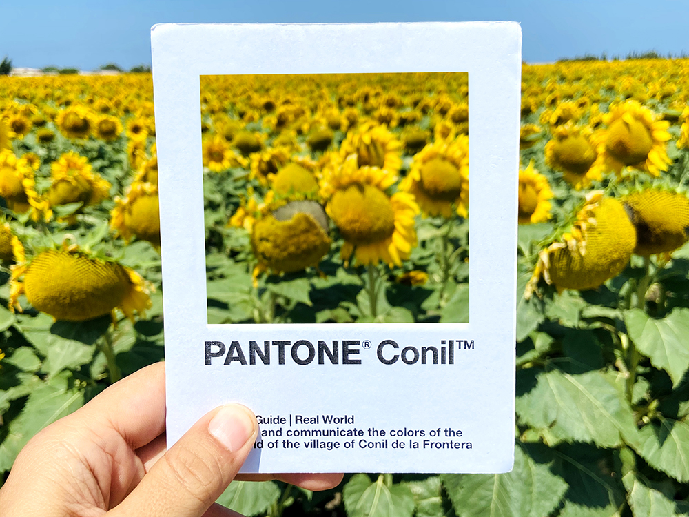 Pantone Conil, la poética pantonera de Ricardo H. Vargas